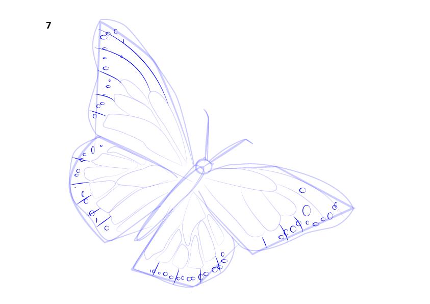 08. Как нарисовать бабочку поэтапно