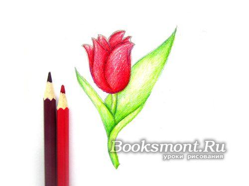 бордовым карандашом затемняем цвет бутона