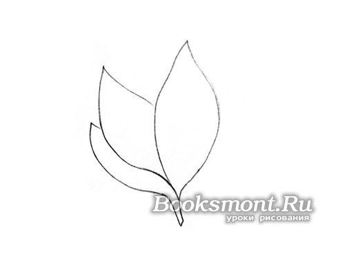 прорисовываем контур листвы