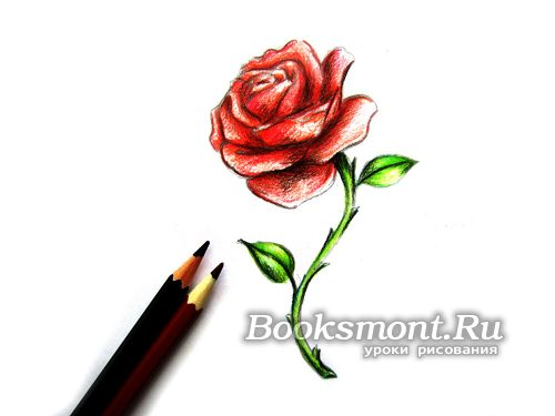 черным карандашом рисуем тень на лепестках и листьях