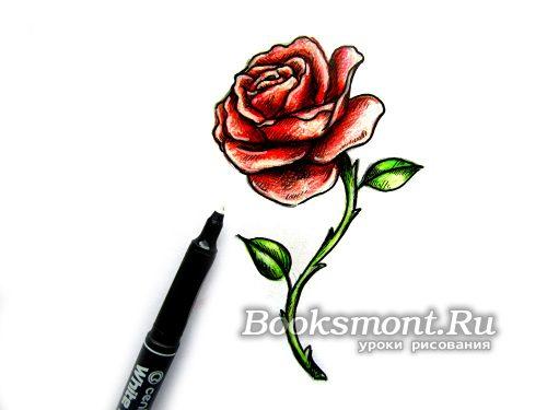 белым маркером создаем блики на лепестках розы