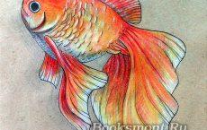 Как нарисовать золотую рыбку карандашом поэтапно для детей