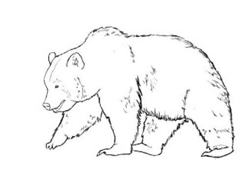 Миниатюра к статье Как нарисовать медведя поэтапно