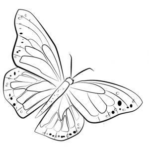 Миниатюра к статье Как нарисовать бабочку поэтапно