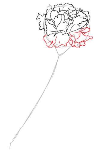 05. Как нарисовать гвоздику поэтапно