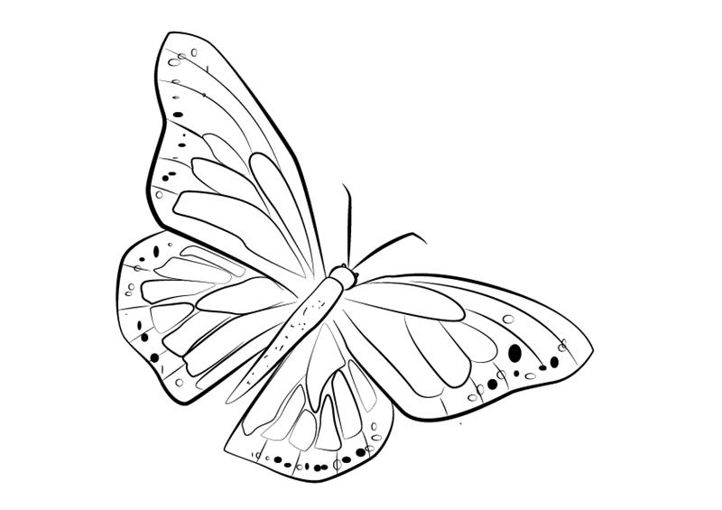 01. Как нарисовать бабочку поэтапно