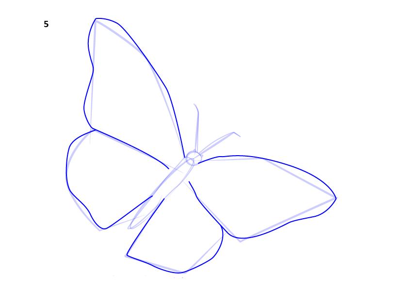 06. Как нарисовать бабочку поэтапно