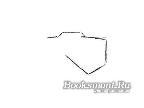 Рисуем макушку головы и переднюю часть мордочки