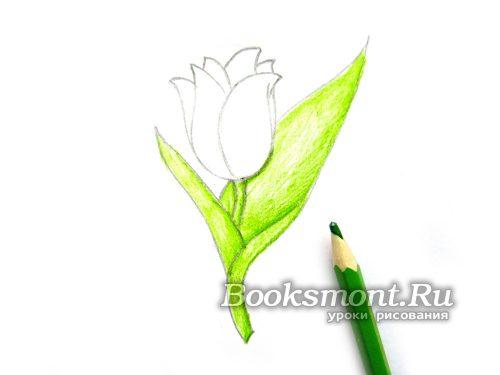 красим зеленым карандашом стебель и листья