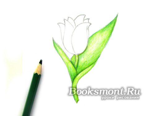 темно-зеленым карандашом рисуем глубину цвета у листьев