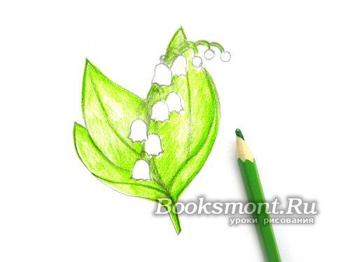 штрихуем зеленым карандашом участки со стеблем и листвой