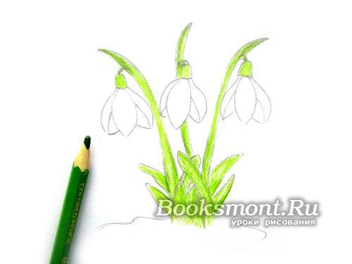 Закрашиваем светло-зеленым карандашом короткие листики