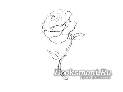 рисуем нижние лепестки бутона розы
