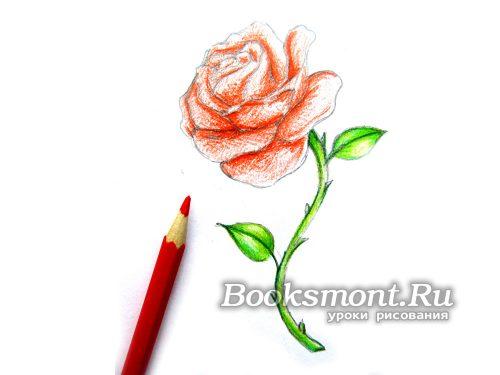 красим все лепестки бутона розы красным цветом