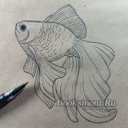прорисовываем контуры рыбки