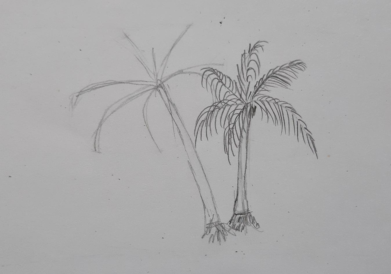Как нарисовать пальму карандашом поэтапно