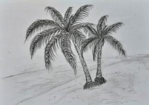 Миниатюра к статье Как нарисовать пальму поэтапно карандашом