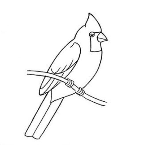 Миниатюра к статье Как нарисовать птицу на ветке