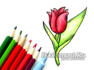 Миниатюра к статье Рисуем тюльпан карандашом поэтапно