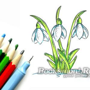 Миниатюра к статье Как поэтапно нарисовать подснежники карандашом