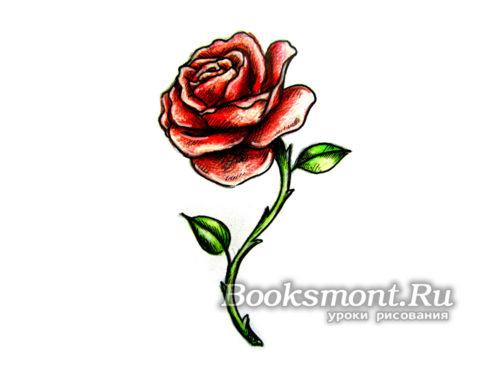 Миниатюра к статье Как поэтапно нарисовать розу цветными карандашами