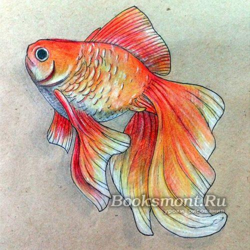 Миниатюра к статье Поэтапное рисование золотой рыбки карандашом